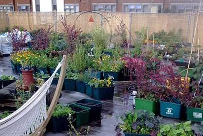 Супермаркет выращивает продукты на крыше