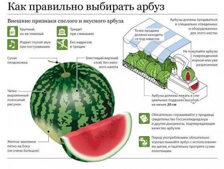 Как выбрать спелый вкусный арбуз