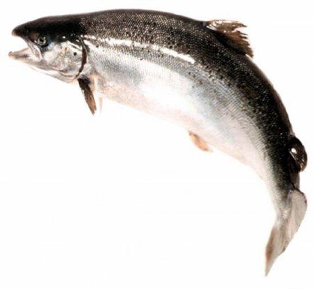 Рецепт приготовления лосося в духовке