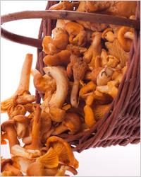 Блюда из лисичек