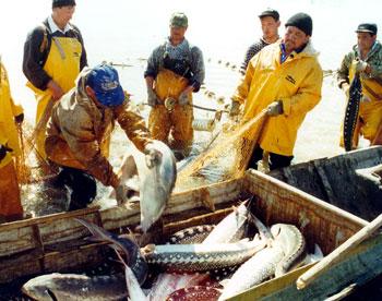 В Астрахани начали ловить речную рыбу