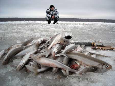 Балтийская рыба вызывает гипертонию