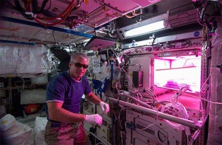 На МКС начнут выращивать овощи