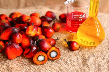 Депутаты предложили запретить использовать пальмовое масло