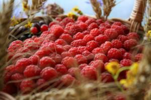 В Рязанской области пройдет Фестиваль малины