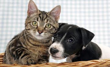 Швейцарцы требуют запретить блюда из собак и кошек