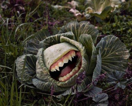 Благодаря эмбарго россияне избавились от ГМО