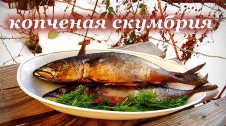 Копченая скумбрия горячего копчения, рецепт и маринад