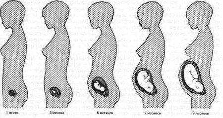 фото узи по неделям беременности фото