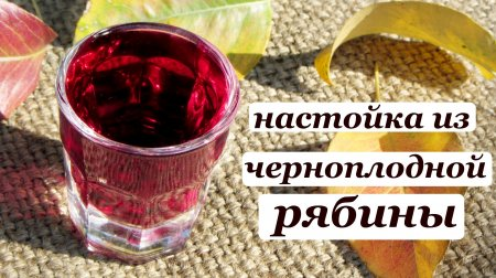 Рецепт настойки из черноплодной рябины на самогоне или водке