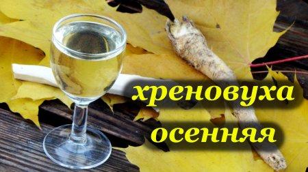 Рецепт хреновухи осенней