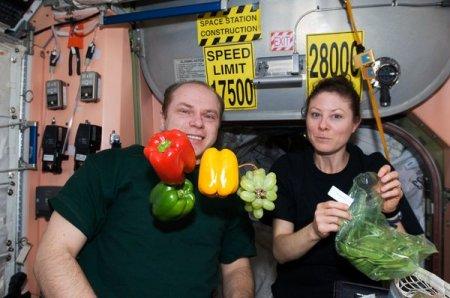 На Международной космической станции будут выращивать перец
