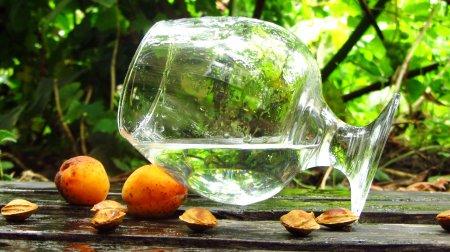 Самогон из абрикосов, от приготовления браги до дегустации