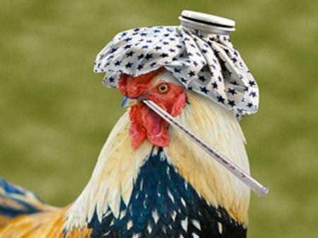 Беларусь приостановила ввоз живой птицы из Европы