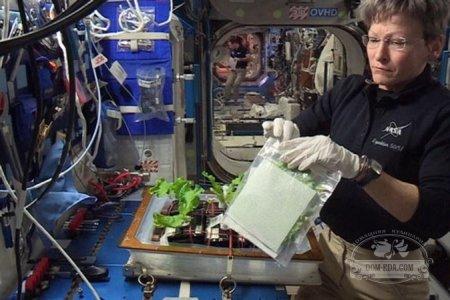 На борту космической станции собрали урожай капусты