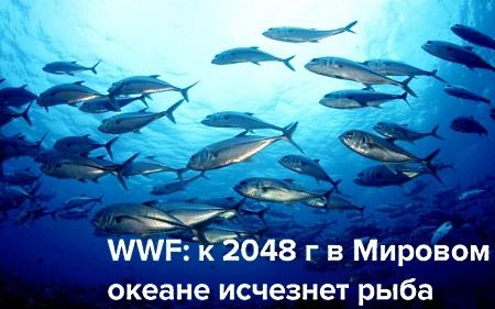 Рыба исчезнет с прилавков?