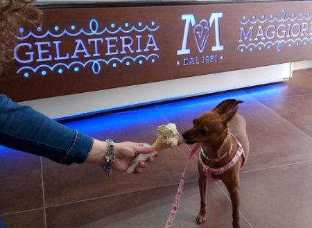В Италии открыли кафе-мороженое для собак