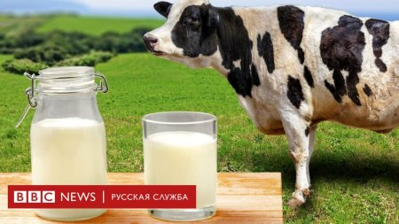 Российские ученые разработали препарат для улучшения молока